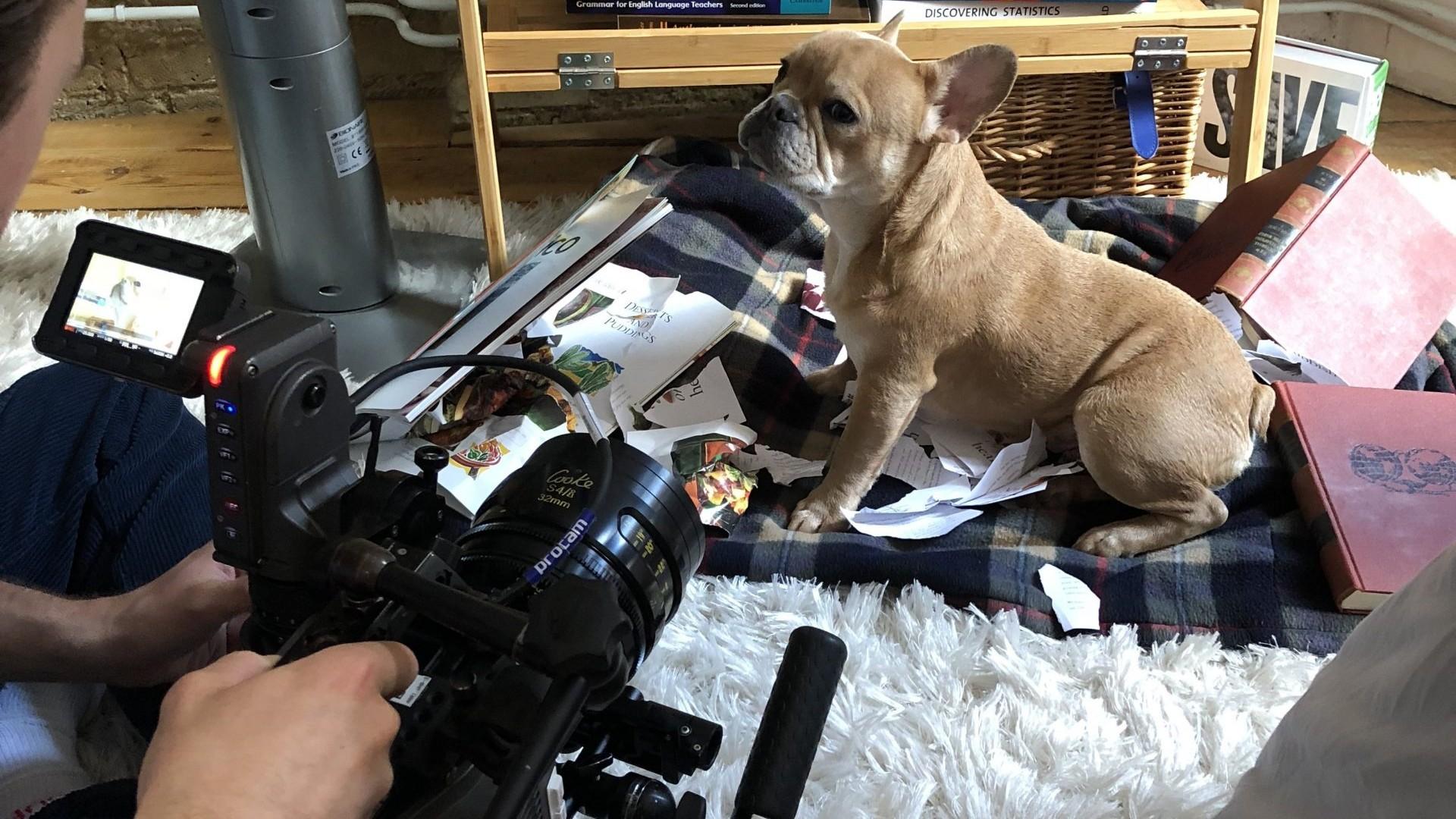 Habitual Media - Behind the scenes - dog