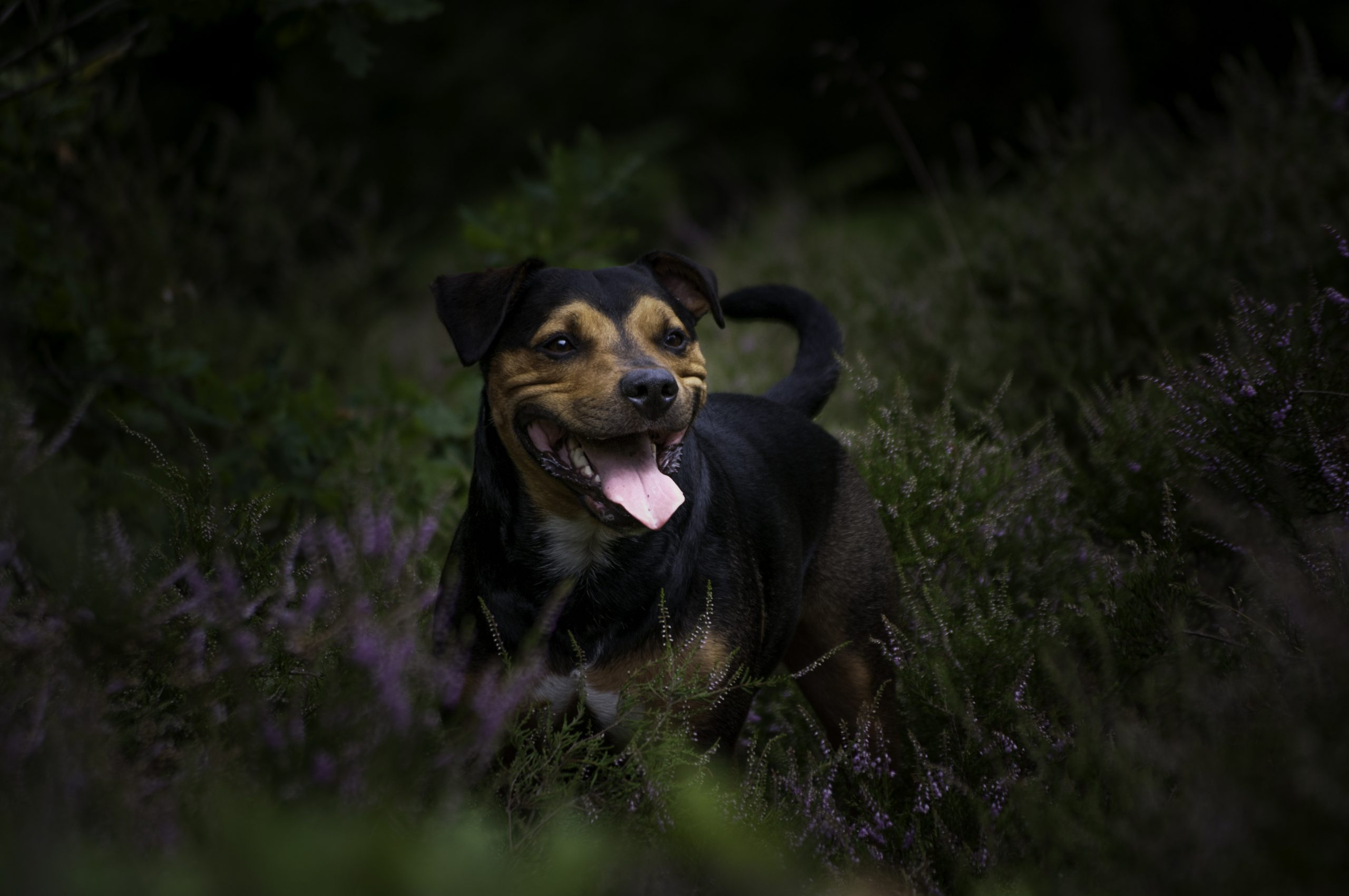A day shooting dogs, mogs and sprogs